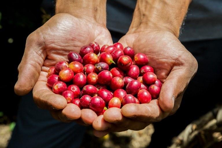 コーヒー豆を持つ生産者