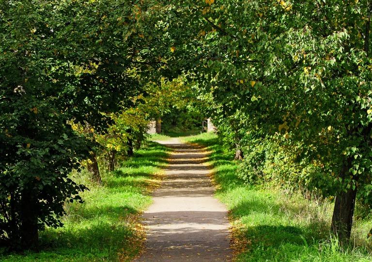 緑のアーチの小道
