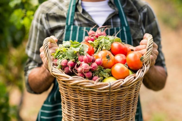 野菜を持つ生産者