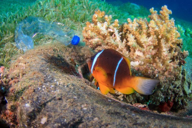 海底のペットボトルと魚